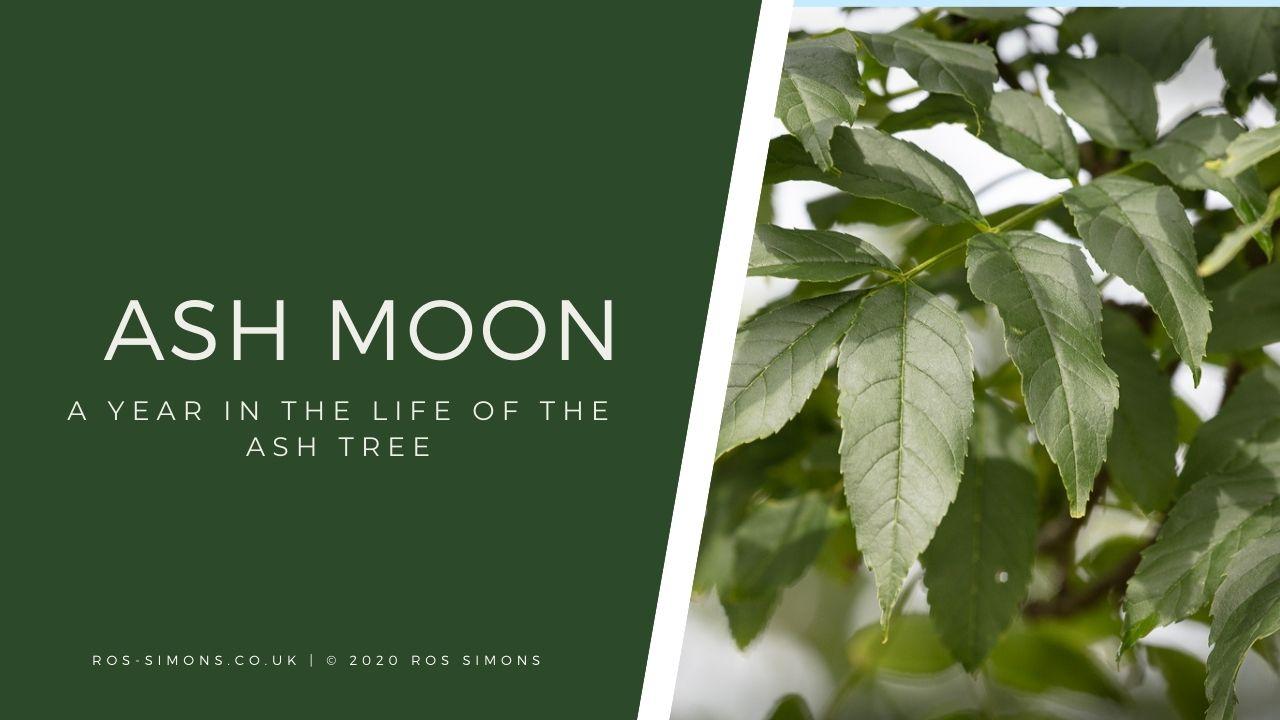 Ash Moon WT
